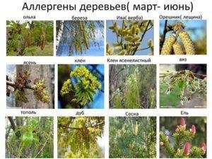 Календарь аллергических растений